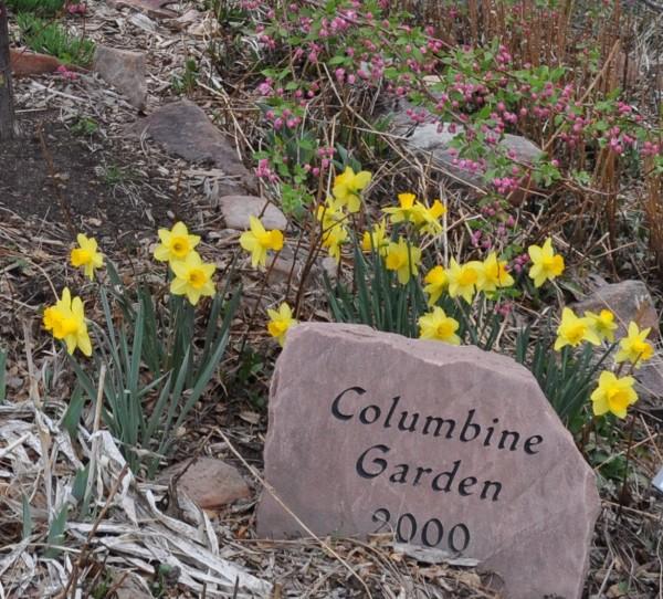 Spellbinder daffodil Jefferson County Courage Garden