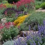 11-06-23 DSC_0013 xs garden history